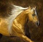 The Gold Horse: Moving into the Light