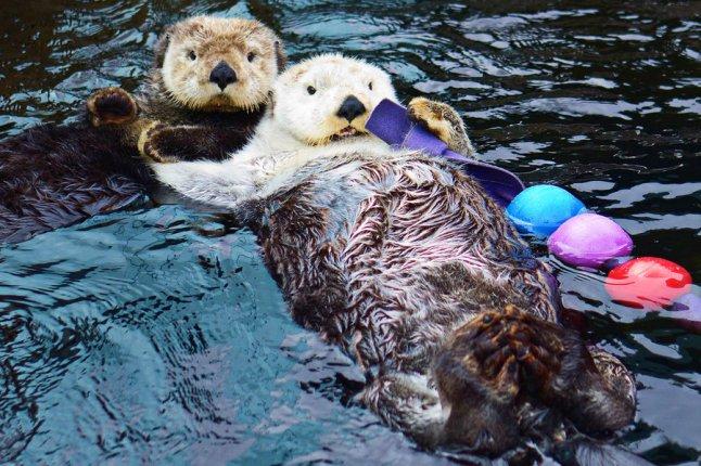 Otter Medicine!