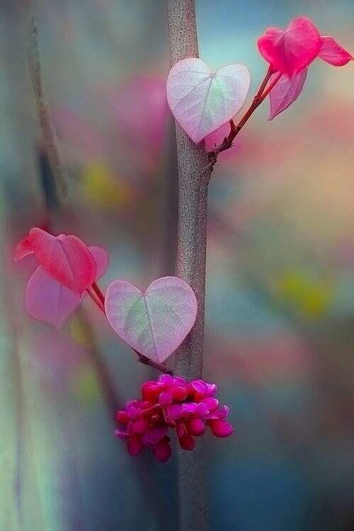 Heart flower image