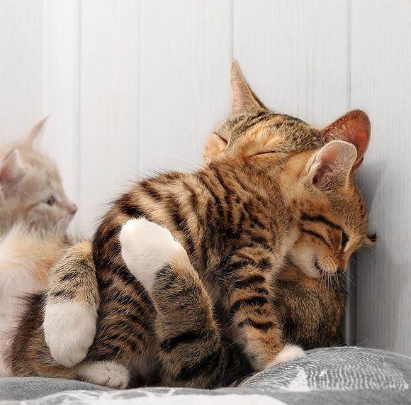 Cat hugs image