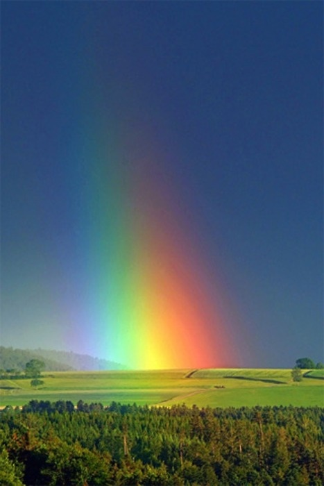 rainbow into field image