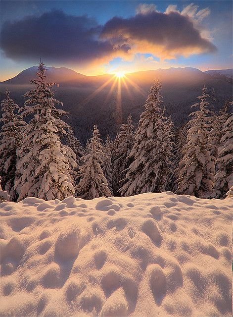 snow light sun pines image