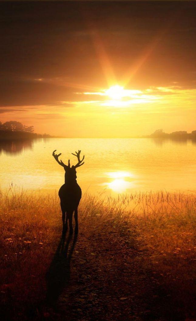 deer sun image