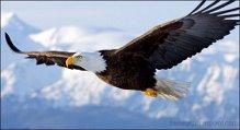 Raven Speaks Lightning Lodge Eagle Dance