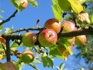 apple-tree_1280