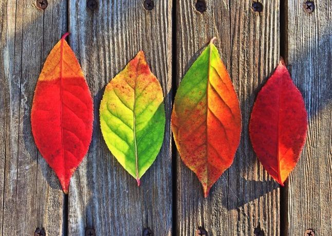 leaves_1280