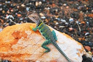 lizard_1280
