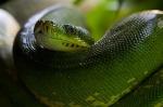 python_640