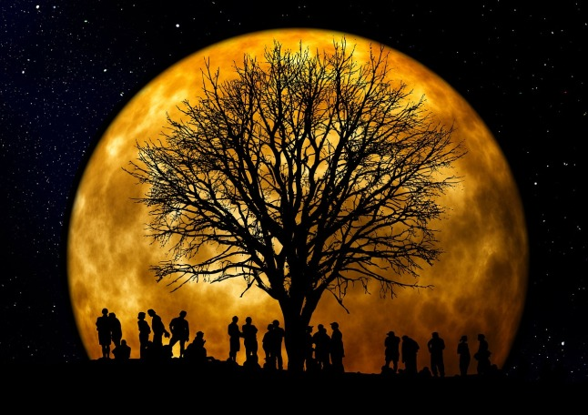 tree-moon_1280