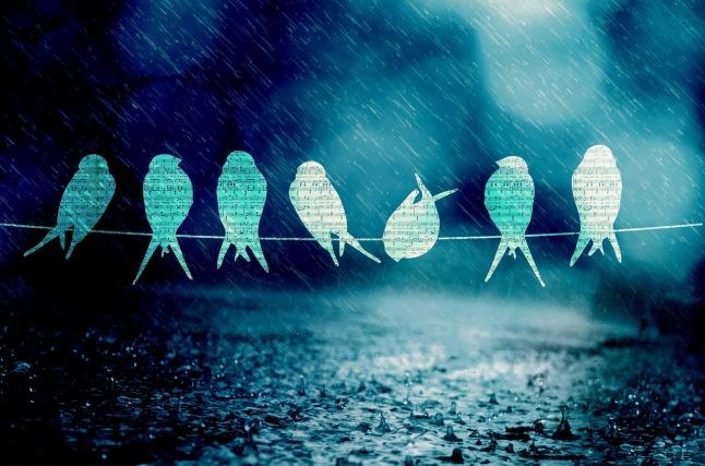 birds_1280