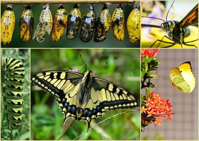 butterfly-stages_1280