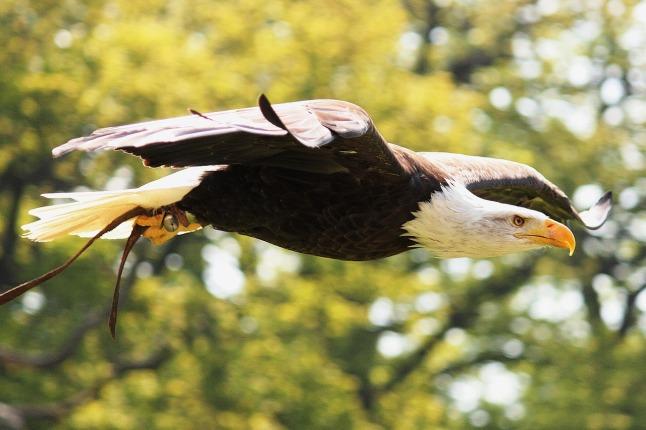 eagle_1280
