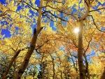 leaves_640