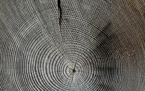 woodgrain_1280