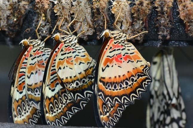 butterflies_1280