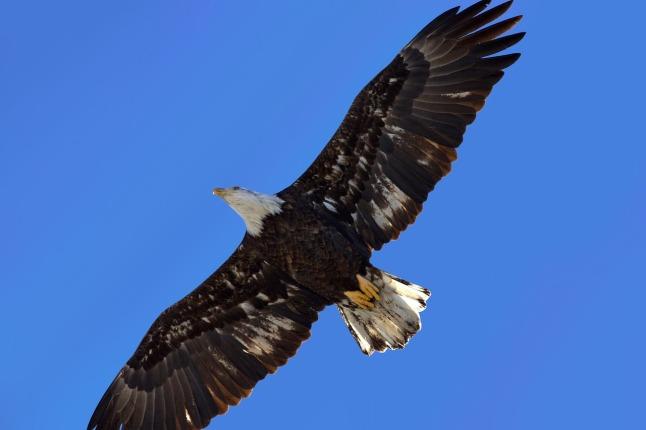 eagle-2054284_1280