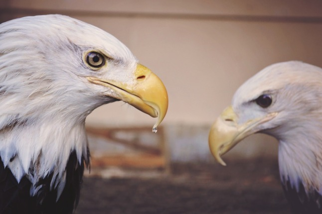 eagle-1245681_1280