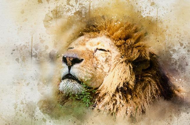lion-1577197_1280