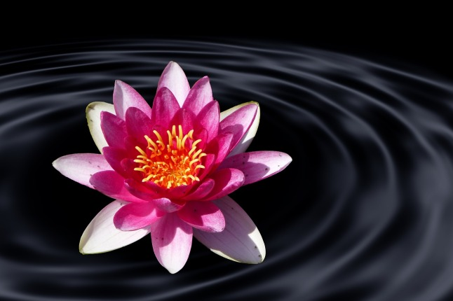 lotus-flower-1915977_1280