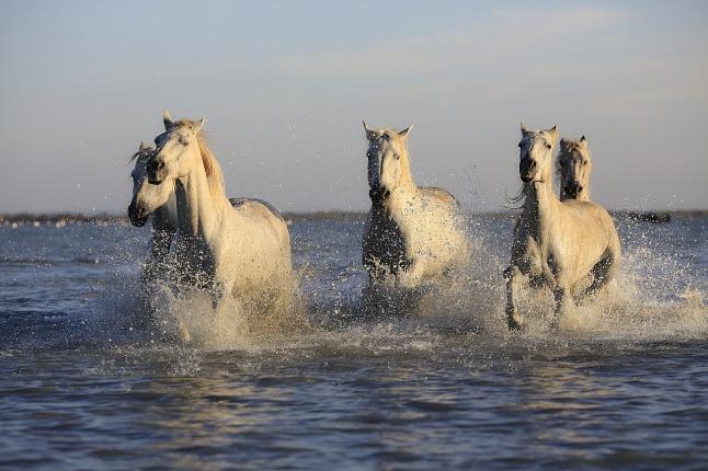 horses-gold