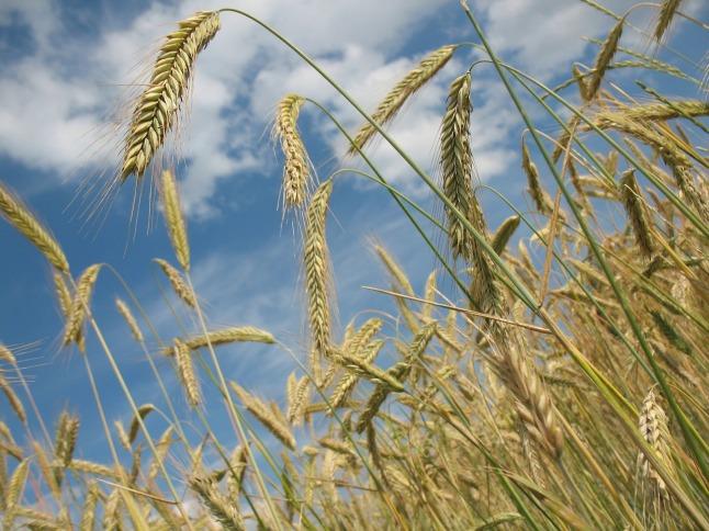 plant-grains