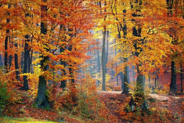 plant-trees-woods