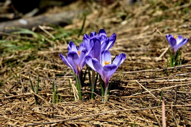 Season-spring