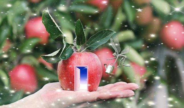 fruit-3268317_1280