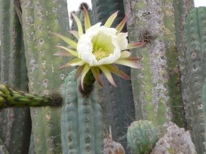 cactus-436050_1280