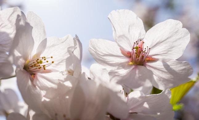 flowers-3288858_1280