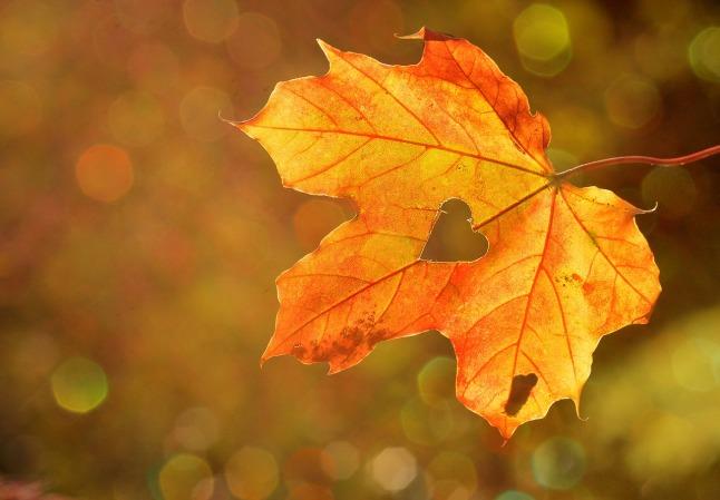 heart-autumn leaf