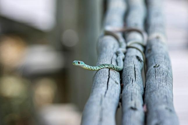 snake_1280